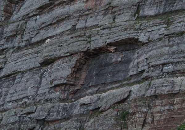 mountain-goats-climbing (8)