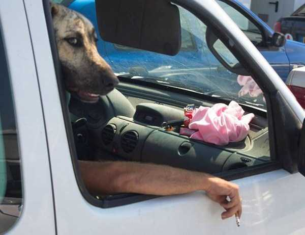 perfectly-timed-dog-photos (20)