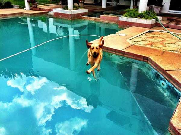 perfectly-timed-dog-photos (22)