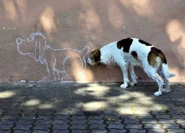 perfectly-timed-dog-photos (27)