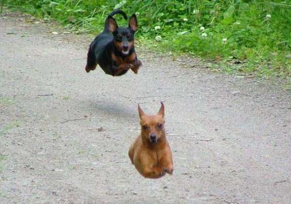 perfectly-timed-dog-photos (31)