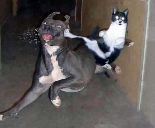 perfectly-timed-dog-photos (33)