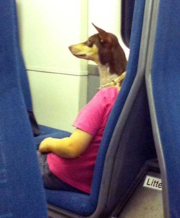 perfectly-timed-dog-photos (37)