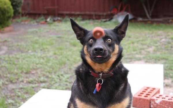 perfectly-timed-dog-photos (4)