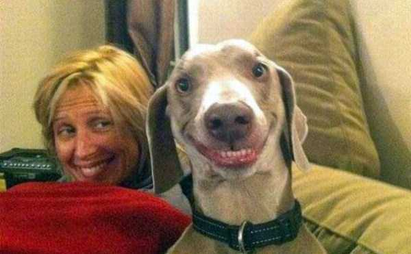 perfectly-timed-dog-photos (42)