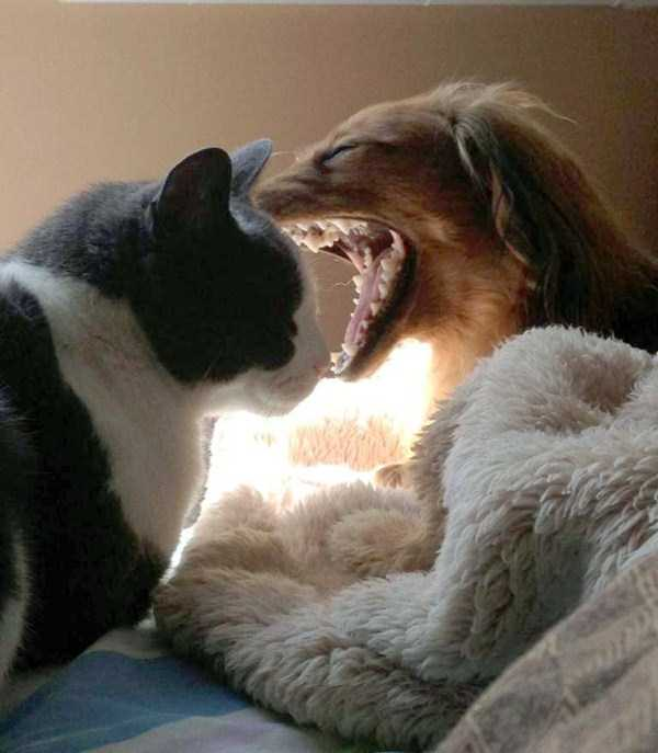 perfectly-timed-dog-photos (49)