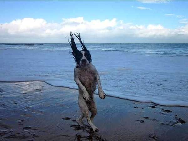 perfectly-timed-dog-photos (7)