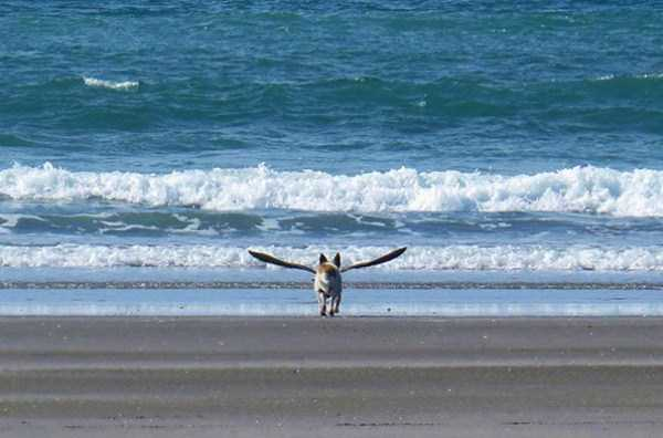perfectly-timed-dog-photos (9)