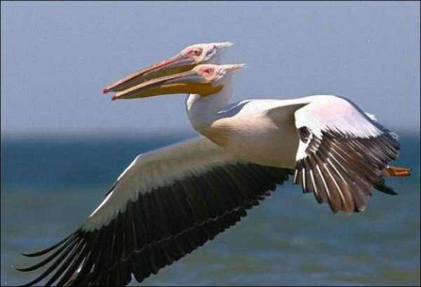 perfectly-timed-photos (11)