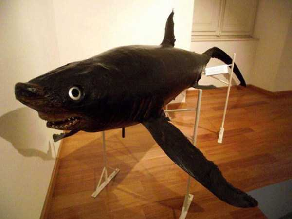 Examples of Terribly Bad Taxidermy (23 photos) 13