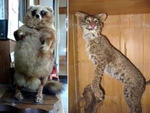 Examples of Terribly Bad Taxidermy (23 photos) 9
