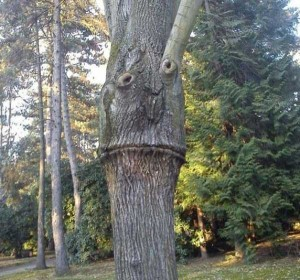 Creepy Faces Seen in the most Unexpected Places (33 photos) 33