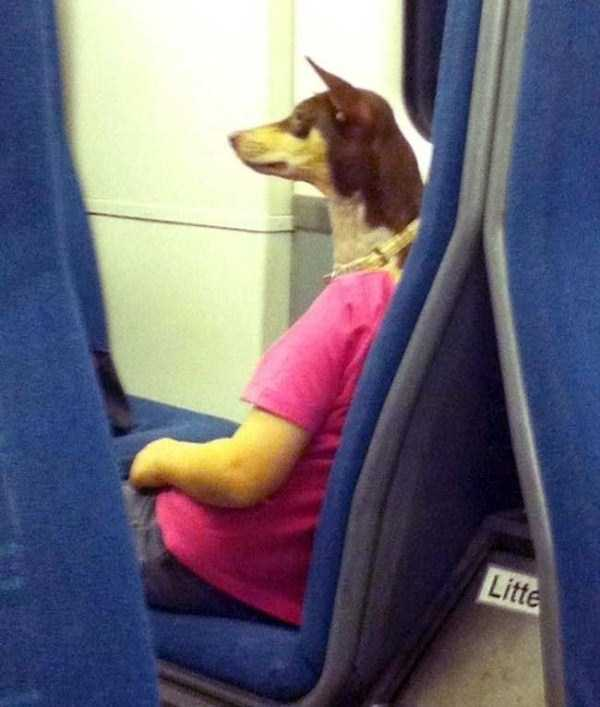 wtf-dogs-pictures (1)