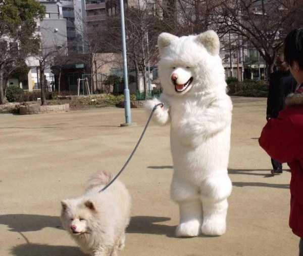 wtf-dogs-pictures (19)