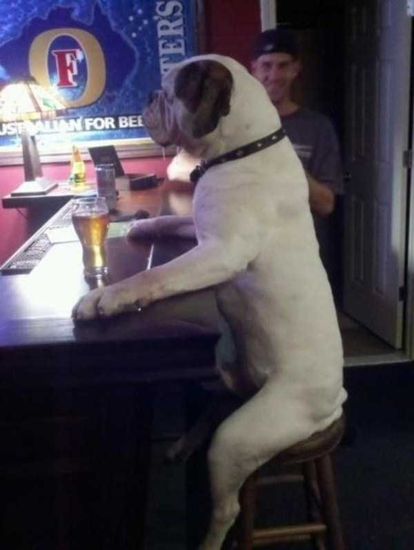 wtf-dogs-pictures (25)