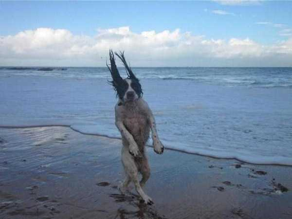 wtf-dogs-pictures (27)
