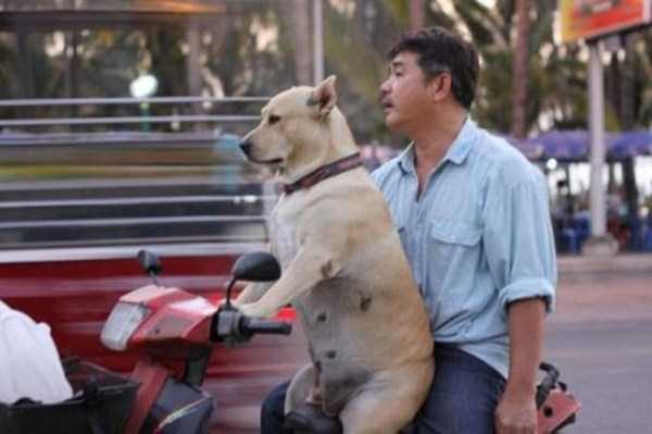 wtf-dogs-pictures (33)