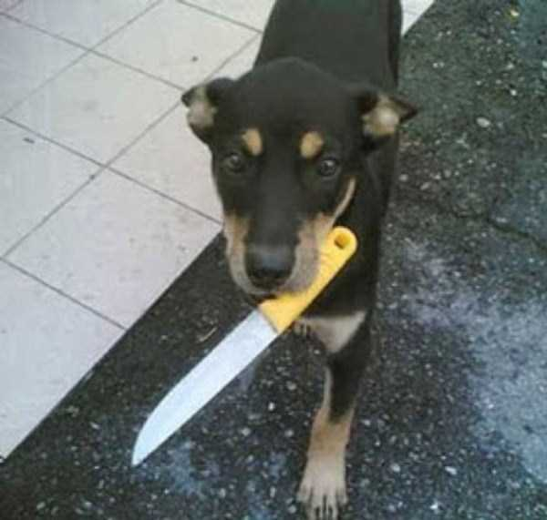 wtf-dogs-pictures (40)