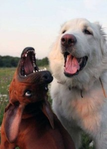 76 Photos of Dogs Doing Awkward Things (76 photos) 47