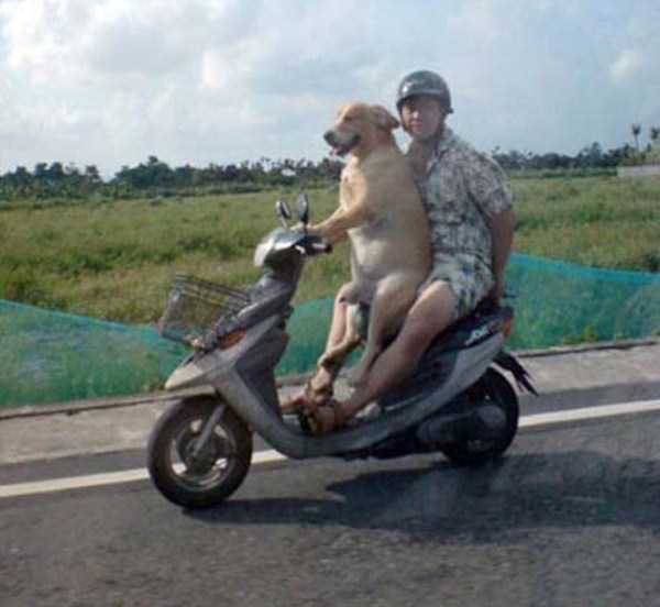 wtf-dogs-pictures (55)