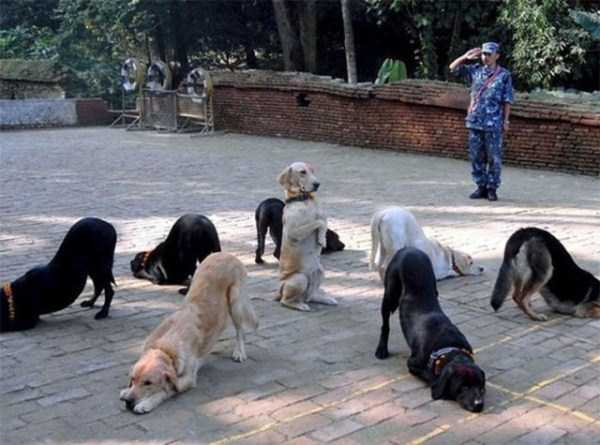 wtf-dogs-pictures (57)