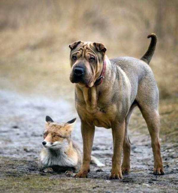 wtf-dogs-pictures (60)