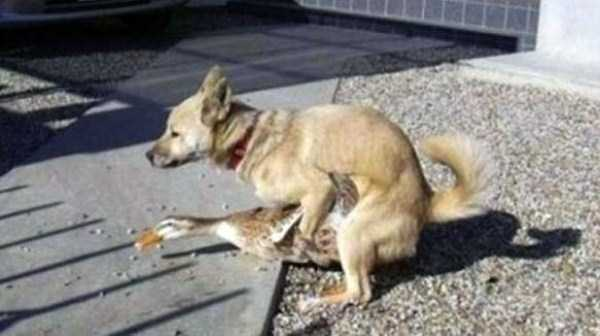 wtf-dogs-pictures (63)