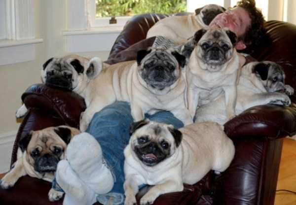wtf-dogs-pictures (64)