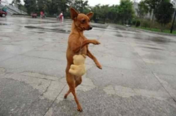 wtf-dogs-pictures (66)