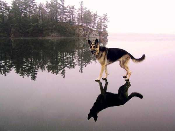 wtf-dogs-pictures (7)