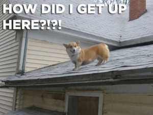 76 Photos of Dogs Doing Awkward Things (76 photos) 70