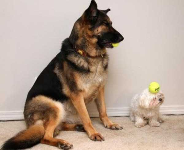 wtf-dogs-pictures (71)