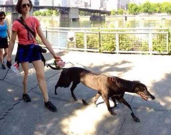 animal-panorama-fails (22)