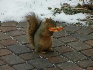 Animals Love Pizza Too (36 photos) 11