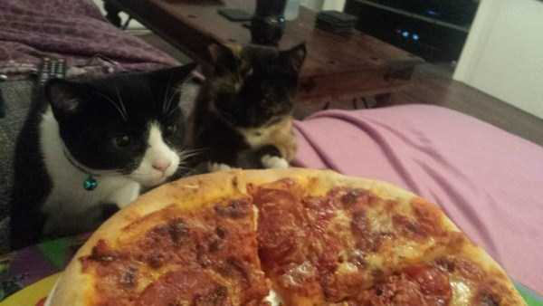 animals-eating-pizza (13)