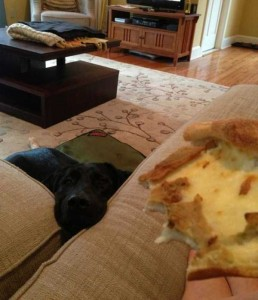 Animals Love Pizza Too (36 photos) 14