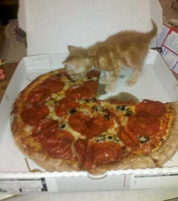 animals-eating-pizza (17)