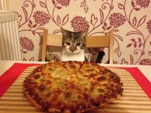 Animals Love Pizza Too (36 photos) 23