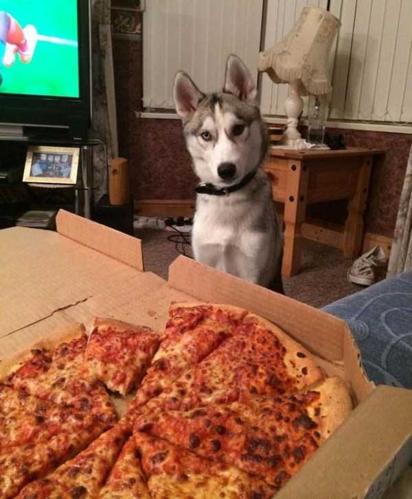 animals-eating-pizza (25)