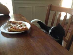 Animals Love Pizza Too (36 photos) 26