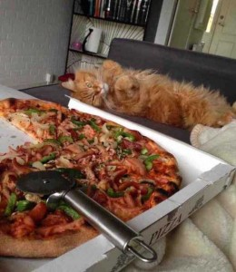 Animals Love Pizza Too (36 photos) 27
