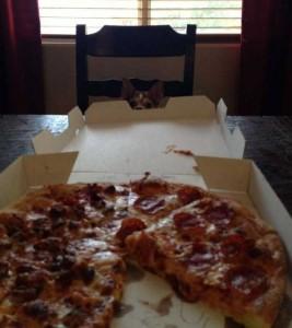 Animals Love Pizza Too (36 photos) 29