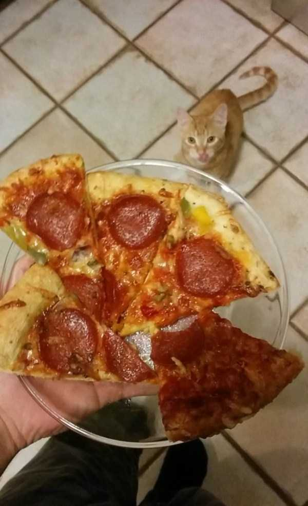 animals-eating-pizza (33)
