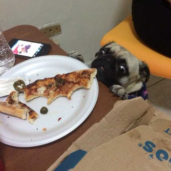 animals-eating-pizza (5)