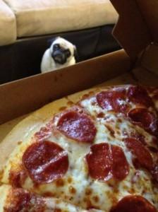 Animals Love Pizza Too (36 photos) 9