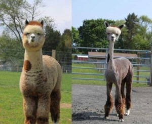 36 Funny Before and After Photos (36 photos) 18