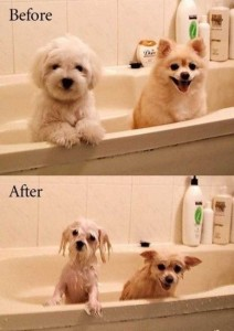 36 Funny Before and After Photos (36 photos) 9