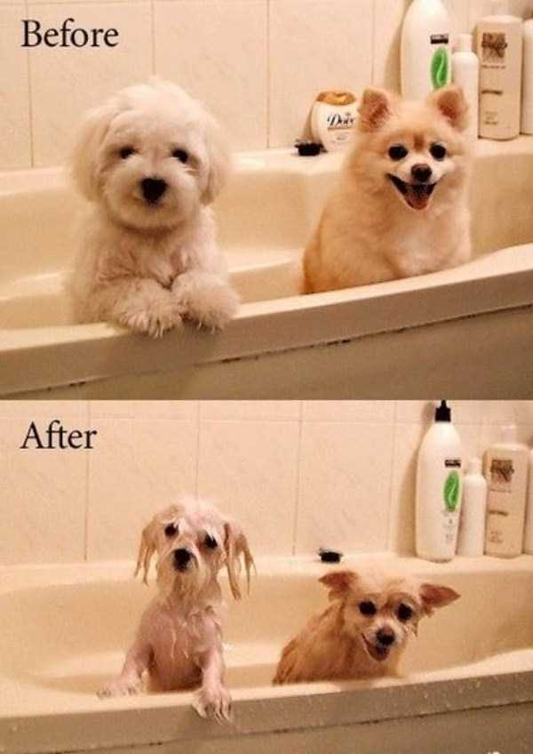 before-and-after (9)