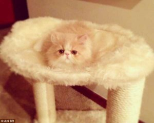 Well-Camouflaged Cats (35 photos) 1