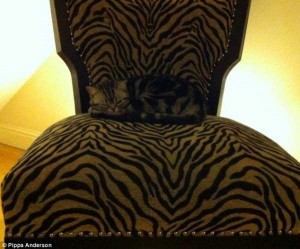 Well-Camouflaged Cats (35 photos) 11